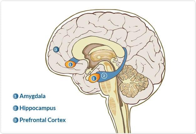 graphic-brain